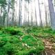 Moosbewuchs in nebligem Wald