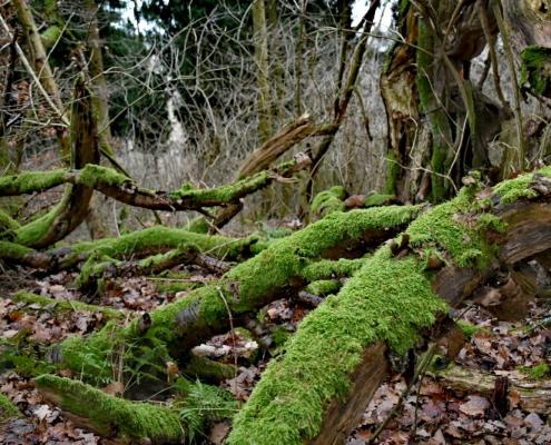 Die Natur im Wald