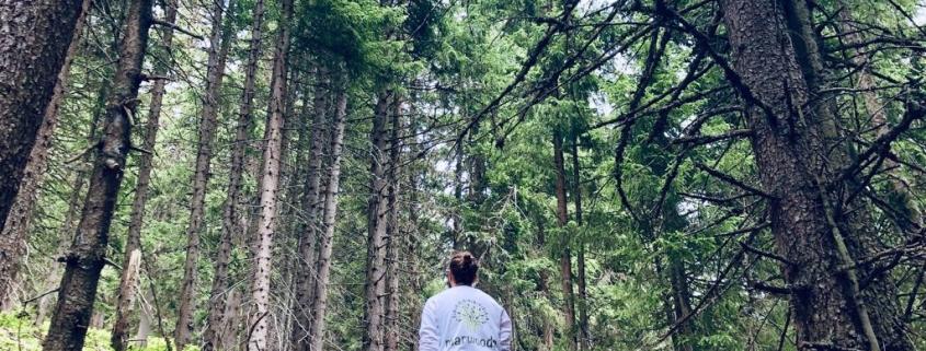 Im Wald deine persönliche Entwicklung starten