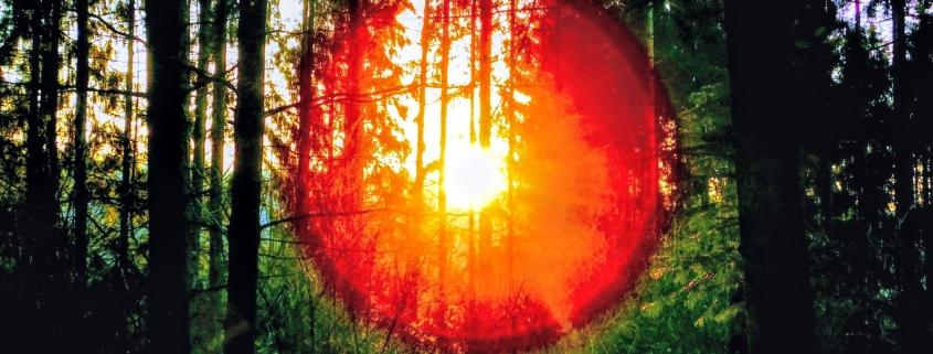 Das Jahr des Waldes strahlt